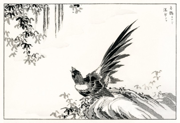 Japanese Magpie and Waterfall illustration from Pictorial Monogr